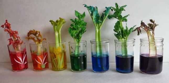 celery-final