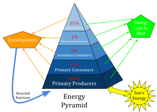 Description: C:\Users\jovana\Desktop\512px-Ecological_Pyramid.svg.png