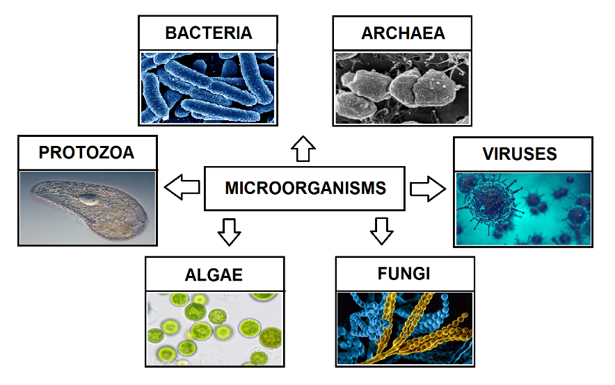 Description: Microorganisms