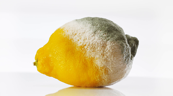 Description: rotten-lemon-covered-with-mold-rotating-over-white_hvhovb3d__F0000